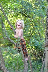 Boy on top of a tree
