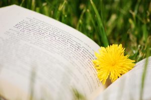 An open book outside in the grass with a dandelion marking the page.