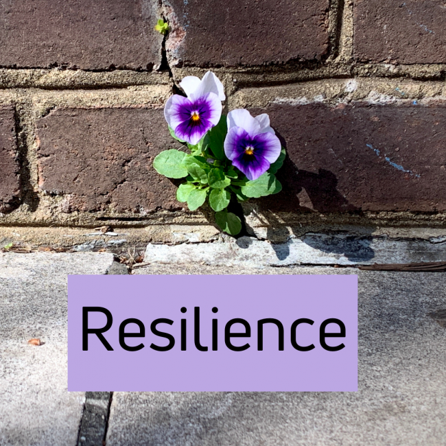 Trauma and Resilience in the Library - ALSC Blog